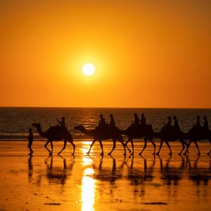 BROOME CABLE BEACH CAMEL