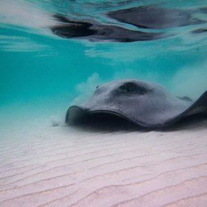Australia - New South Wales - Jervis Bay - Dive Jervis Bay - Diving-4