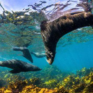 © Dive Jervis Bay