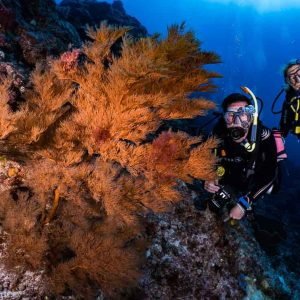 © Pro Dive Lord Howe