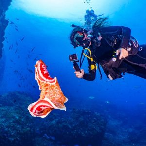© Lord Howe Island Pro Dive
