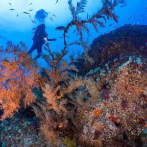 © Jake Parker, Pro Dive Lord Howe