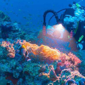 © Jack Schick, Pro Dive Lord Howe