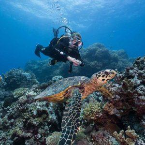 © Coral Sea Dreaming