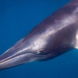 © Deep Sea Divers Den - Ocean Quest