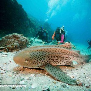 Australia - Queensland - Stradbroke Island - Manta Lodge & Dive Centre -_-85