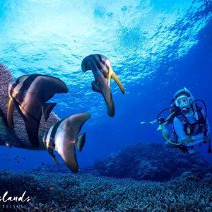 © Dive Munda