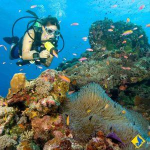 © Manta Ray Bay and Yap Divers