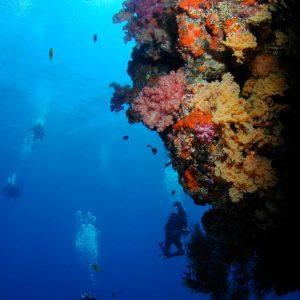 © Ra Divers Fiji,