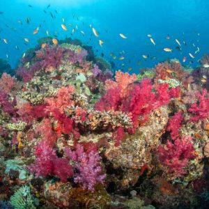 © Paradise Taveuni