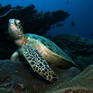 © Bastianos Bunaken Dive Resort - Dirk Czerwek