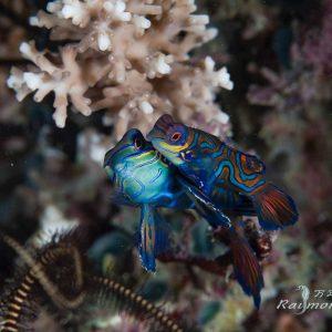 © Bastianos Lembeh Dive Resort - Raymond Man
