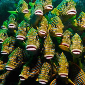 © Papua Explorer Dive Resort