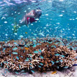 © Wakatobi Dive Resort - Walt Stearns - Karen Stearns