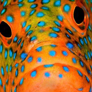 © Wakatobi Dive Resort - Pasquale Pascullo