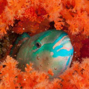 © Wakatobi Dive Resort - Erik Schlogl