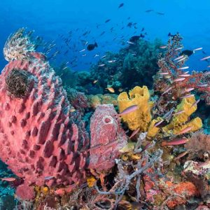 © Wakatobi Dive Resort
