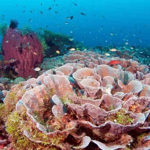 © Wakatobi Dive Resort - Glen Cowans