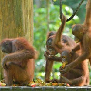 © Malaysia Tourism