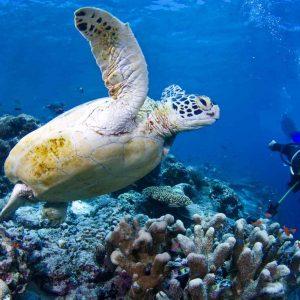 © Sipadan Kapalai Dive Resort