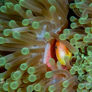 © Sams Dive Tours - JLA