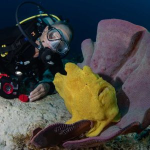 © Pura Vida Cabilao - Sea Explorers
