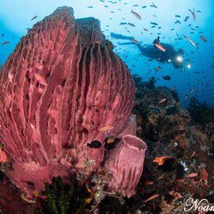 @ Atlantis Resort - Roni Ben Aharon