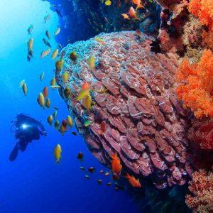 ©Kasai Village Dive Spa Resort Diving