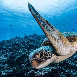 Tahiti - Rangiroa - Top Dive - DSC_0775 - © Greg Lecoeur