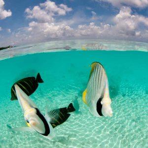 Tahiti - Rangiroa - Top Dive - © Frederique Legrand