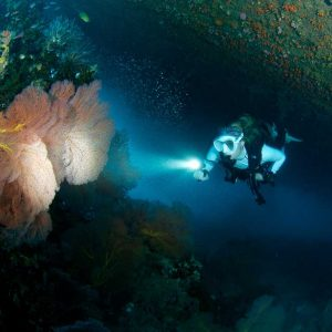© Pacific Dive